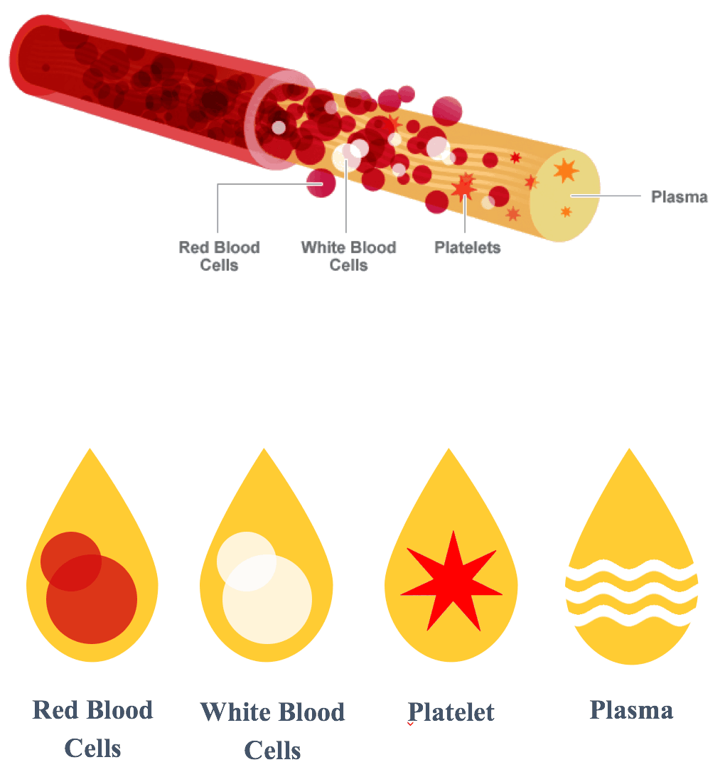 PRP - Red Blood Cells/White Blood Cells/Plateles/Plasma